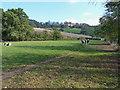SO5297 : Friesians guarding the path to Bowman Hill Farm by Richard Law