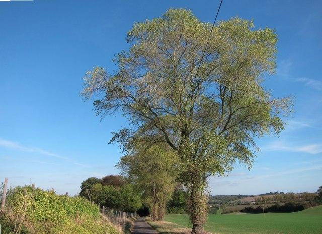 Lane from Shottenden