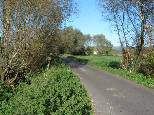 Yeap's Drove, Westhay Moor