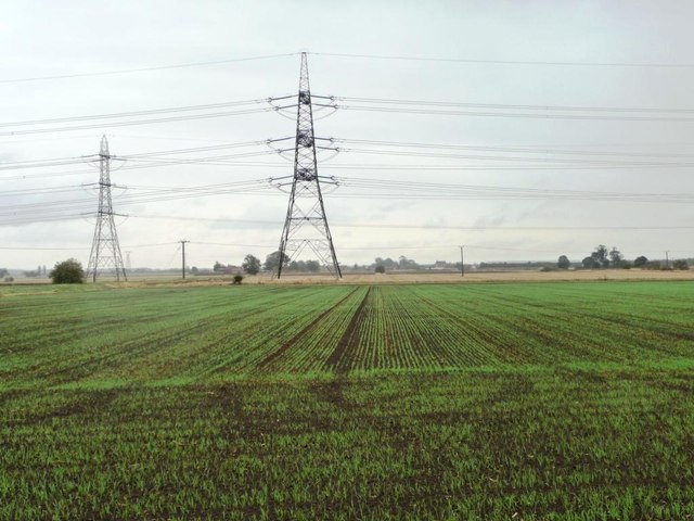 Two fields, two crops, east of Owston Road
