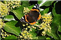 TR3357 : Red Admiral by Philip Halling