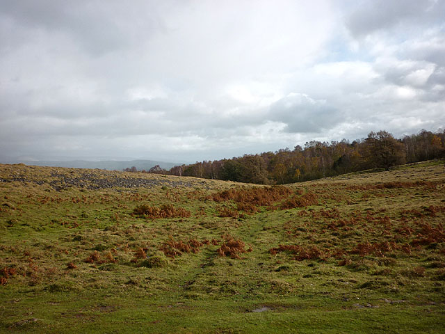Limestone grassland, northern Whitbarrow