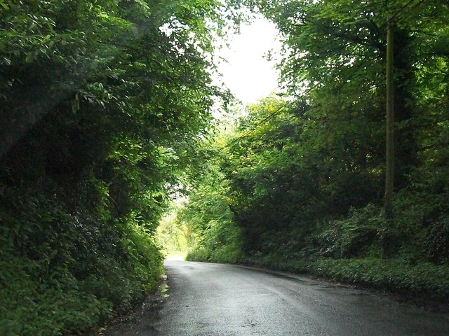Road through woodland at Loughcrew