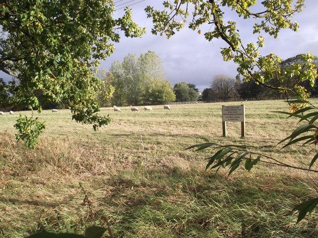 Field with sheep, Shipton Under Wychwood