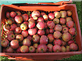 SE6078 : Ampleforth Abbey apples by Pauline E