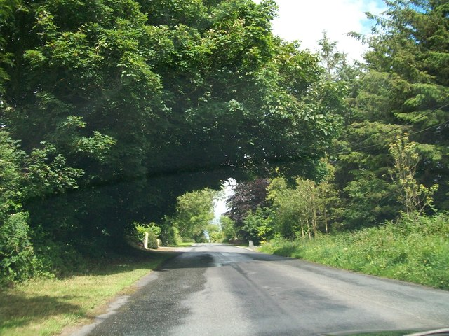 The tree-lined Newtown to Balrath Road