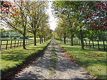 TL7448 : Tree Lined Drive by Keith Evans