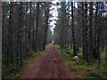 NH9208 : Path through dense trees, Rothiemurchus by Phil Champion