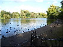 TQ2876 : Battersea Park lake by Marathon