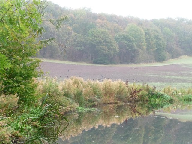 Woods on Cuckoo Hill