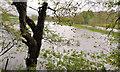 J3067 : Flooding near the Drum Bridge, Dunmurry by Albert Bridge
