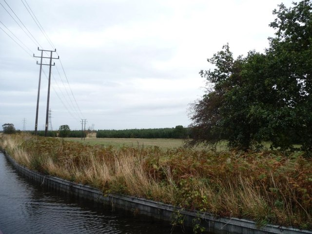 Telegraph poles heading towards the new woods
