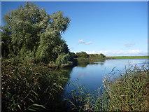 NT6578 : Rural East Lothian : Seafield Pond, Belhaven, Dunbar by Richard West