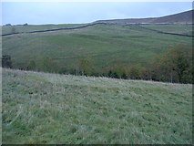 NY7766 : Possible round house outline in pasture above Codley Gate by Hazel Hambidge