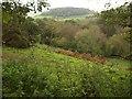 SY1292 : Valley below Bald Hill by Derek Harper