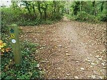 SX9156 : Orange Way in Devon and Torbay (8) by Shazz