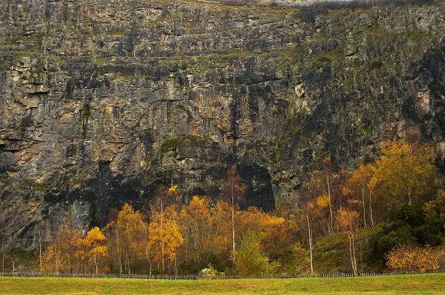 Autumnal birches at Warton Main Quarry