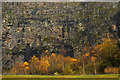 SD4972 : Autumnal birches at Warton Main Quarry by Karl and Ali