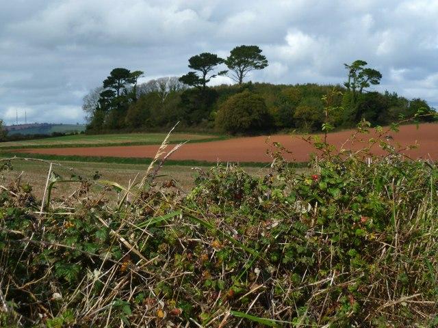 Orange Way in Devon and Torbay (24)