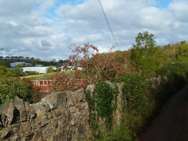 Orange Way in Devon and Torbay (31)