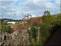 SX8658 : Orange Way in Devon and Torbay (31) by Shazz