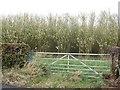 NS7150 : Biofuel, Limekilnburn Road by Richard Webb