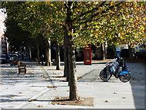 TQ2977 : Barclays Cycle Hire Docking Station, Grosvenor Road, Pimlico by PAUL FARMER