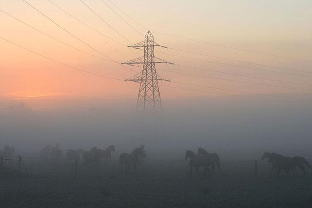 Horses and a pylon and a misty sunrise