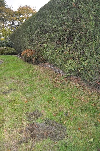 Tiverton : Hedgerow & Lawn on Beech Tree Drive
