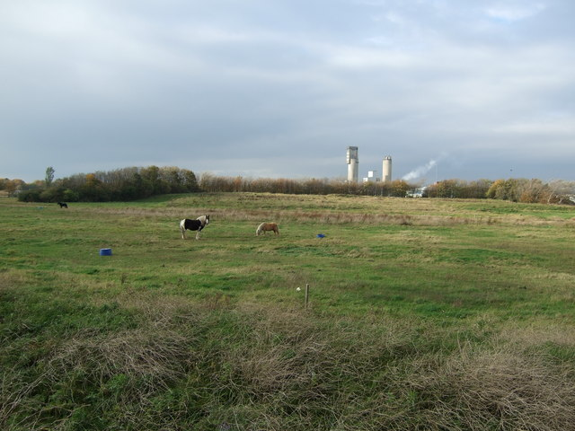 Grazing land, Middlesbrough