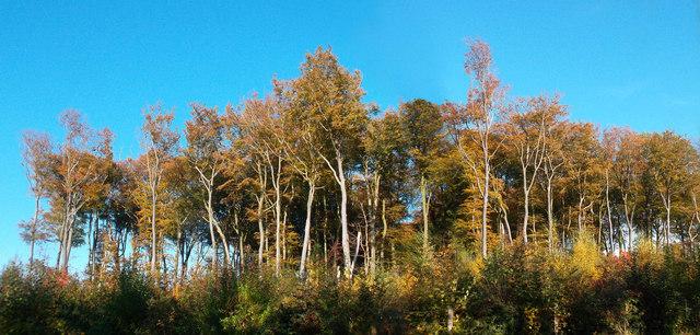 Seasonal Colours, Rudgings Plantation
