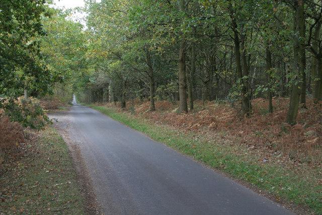 Rigg Lane