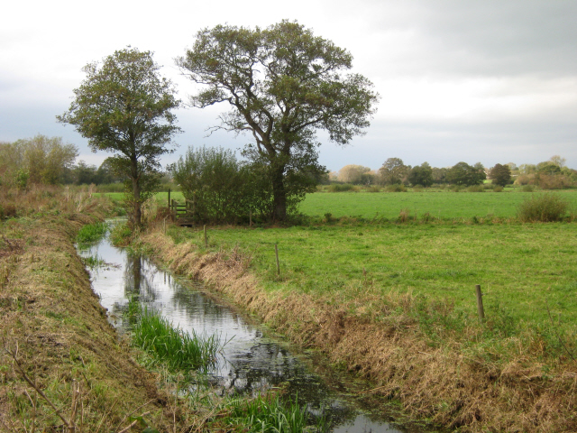 Heath Rhyne, Meare Heath