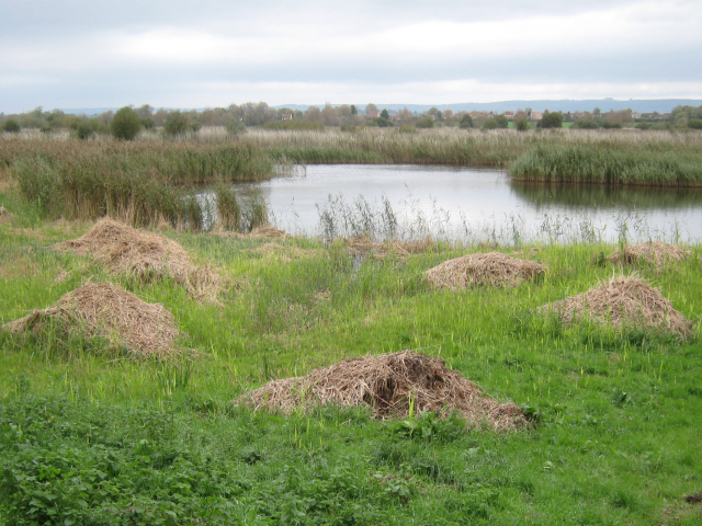 View from Meare Heath Hide