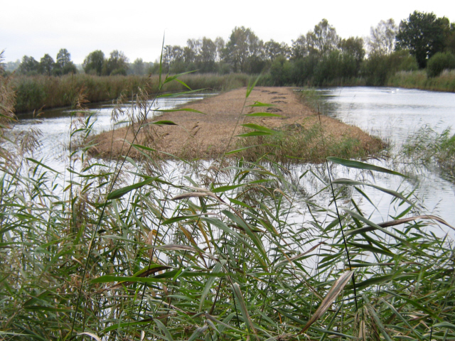 Reed cutting on Walton Heath, Ham Wall Nature Reserve