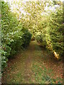 TM4282 : Footpath to Station Road by Adrian Cable