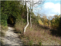 TQ1753 : Footpath, White Hill by Robin Webster