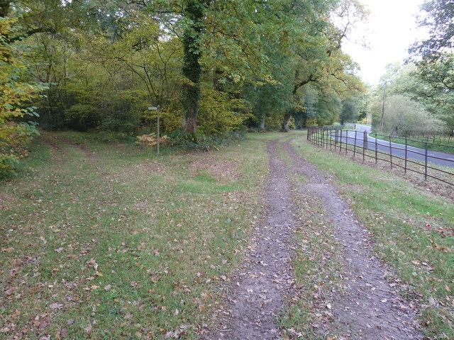Footpath into Birchen Copse