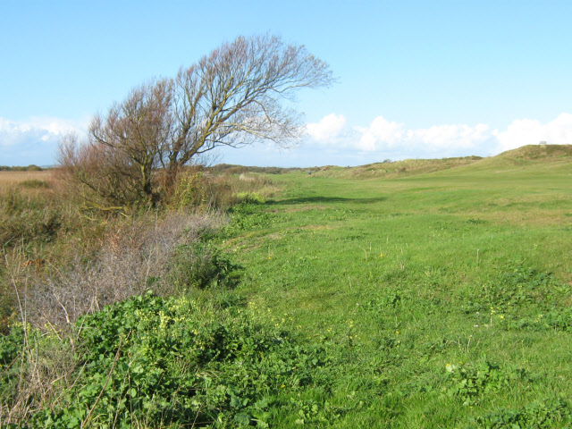Windblown tree, Burnham and Berrow Golf Course