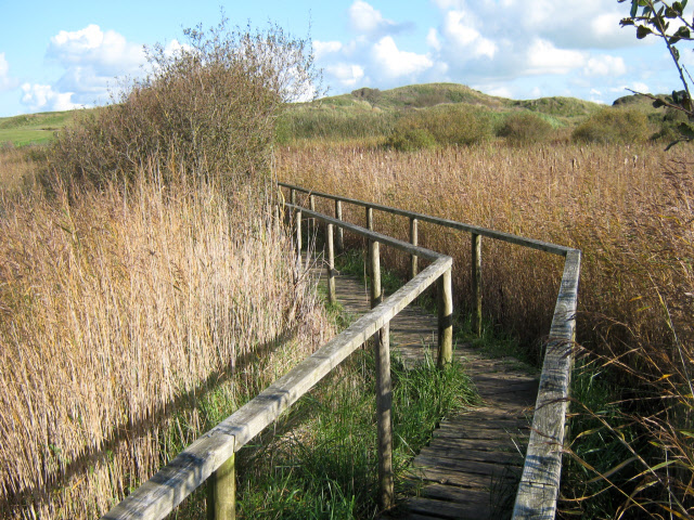Walkway across reed beds, Burnham Dunes