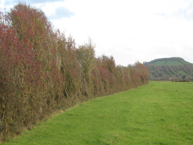 Field edge, Berrow