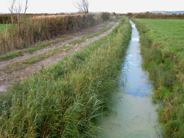 Farm track and rhyne, Berrow