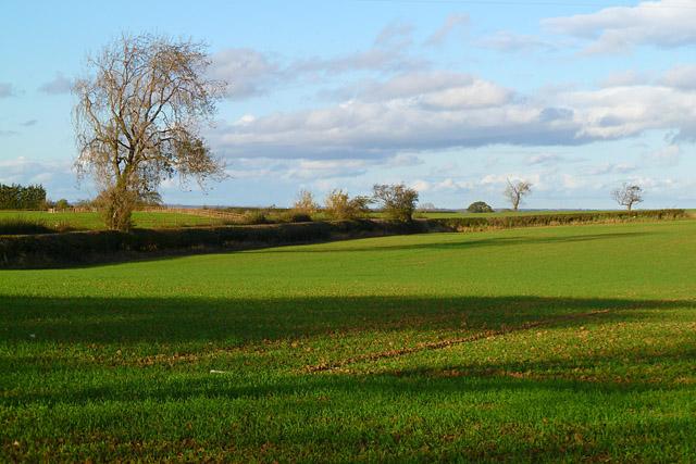 Farmland, Croft-on-Tees