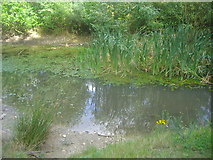 TQ1362 : The A3 pond on Esher Common by David Howard