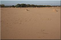 SK8159 : Collingham desert by Richard Croft