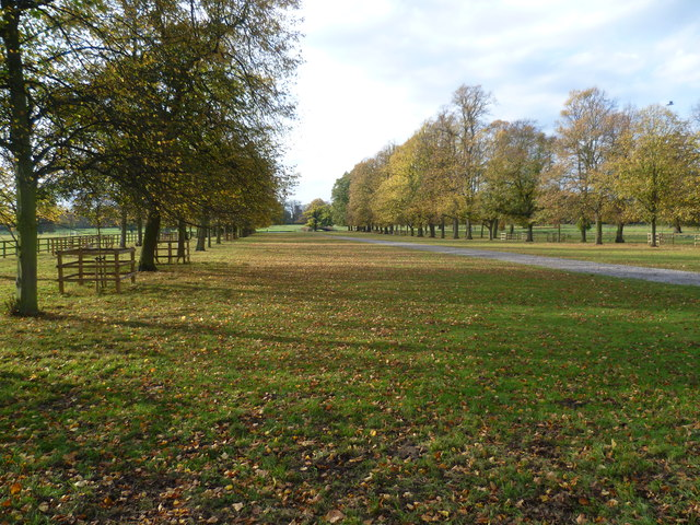 Avenue of trees in Syon Park