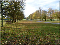 TQ1776 : Avenue of trees in Syon Park by Marathon