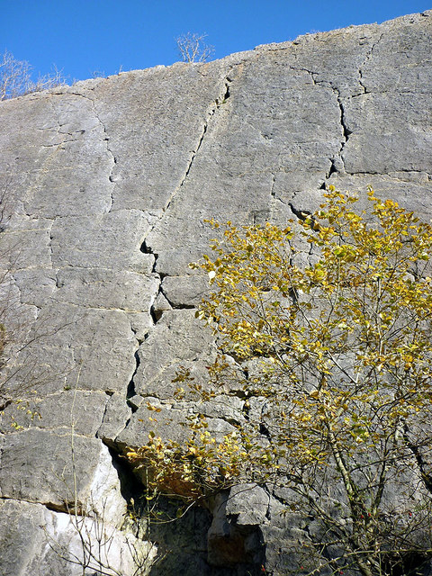 Looking up the Main Wall at Trowbarrow Quarry