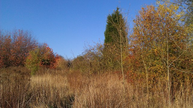 Autumn colours on St Mary's Allotments