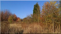 SK5802 : Autumn colours on St Mary's Allotments by Mat Fascione